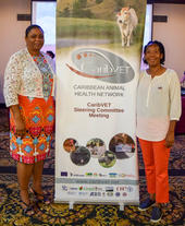 dr.-kathian-hackshaw-left-cvo-of-saint-vincent-the-grenadines-and-dr.-tracy-challenger-right-cvo-of-saint-kitts-and-nevis-at-the-13th-steering-committee-meeting-of-caribvet-c-p.-hammami-cirad-caribvet_articleimage.jpg