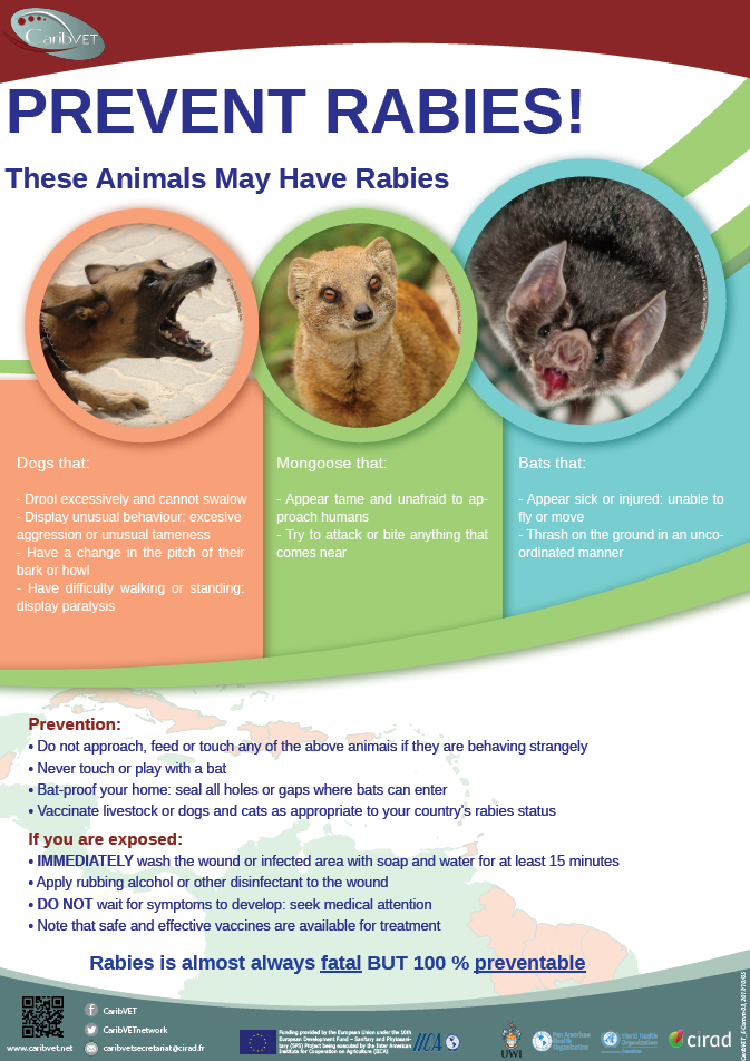 Rabies / Awareness materials - Caribbean animal health network